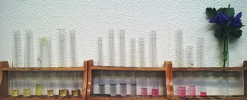 Farben der Akelei bei verschiednen pH-Werten